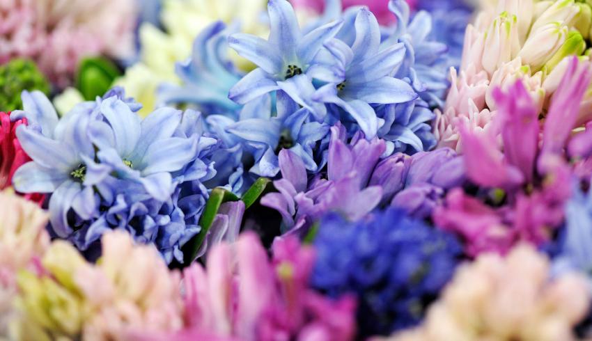 Significati e simbologie dei fiori di Primavera